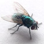 greenbottlefly 500